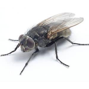Boutique m thodes de lutte insecticide raticide solution biologique pi ge limaces - Insecticide mouche de l olive ...